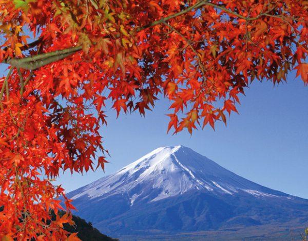 l_180037_kyoto